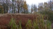 Moeraszone Panneweel verdwenen door droogte in zomer