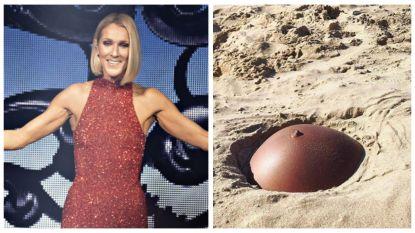 SHOWBITS. Celine Dion deelt een zeldzame foto van haar zoontjes en weet jij wiens buikje dit is?