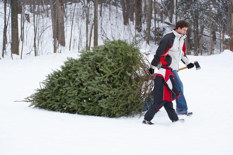 Zo Kies Je De Perfecte Kerstboom Binnenland Nieuws Hln