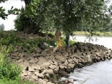 Wilgen langs de IJssel aan de basis van vervangend kunstproject IJsselbiënnale: 'Je kan er geen genoeg van krijgen'