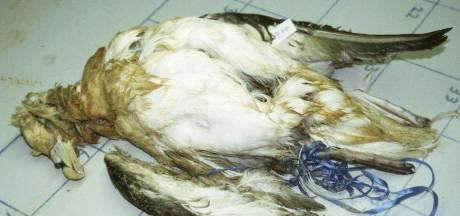 Grote zorgen om 'plastic monster' langs Noordzeekust: 'Heel veel dieren gaan er aan dood'