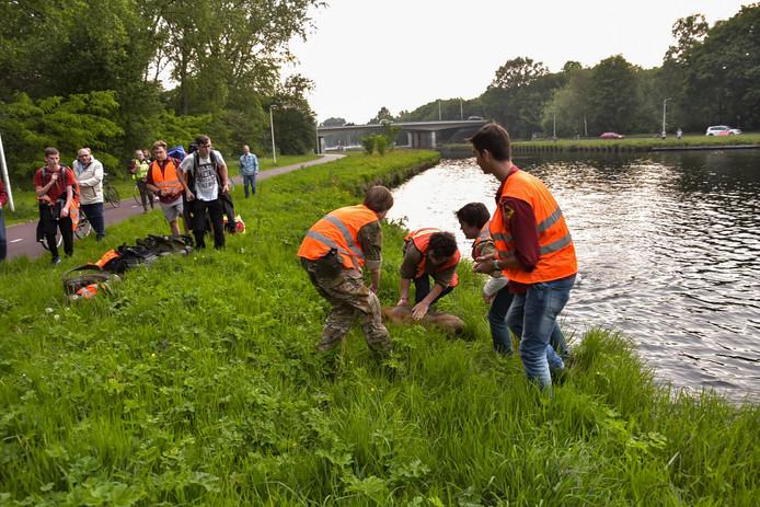 Hert uit kanaal Tilburg gered