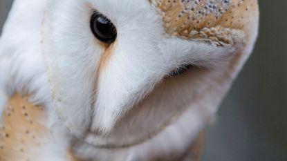 Kennismaking met uilen en vrije picknick in boomgaard Panneweel
