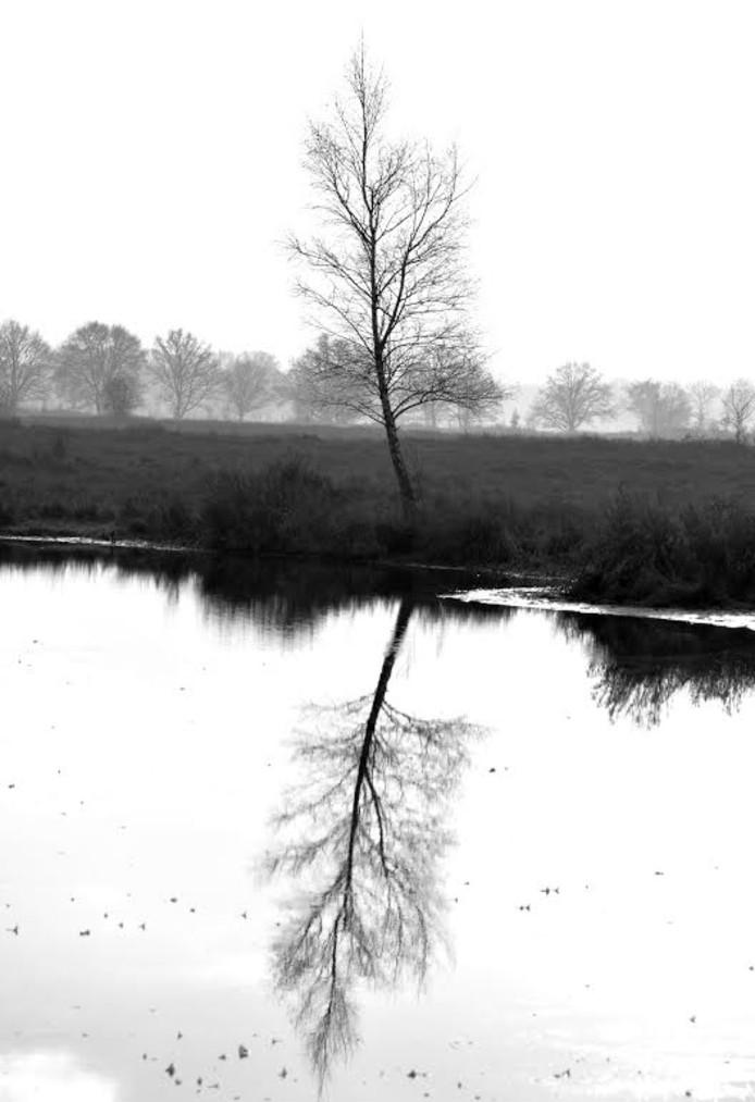 Een van de foto's van Natuur in de buurte is een stilleven van een berk langs het water.