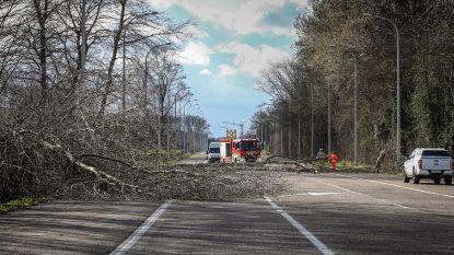 Limburgse hulpdiensten overrompeld met oproepen voor stormschade