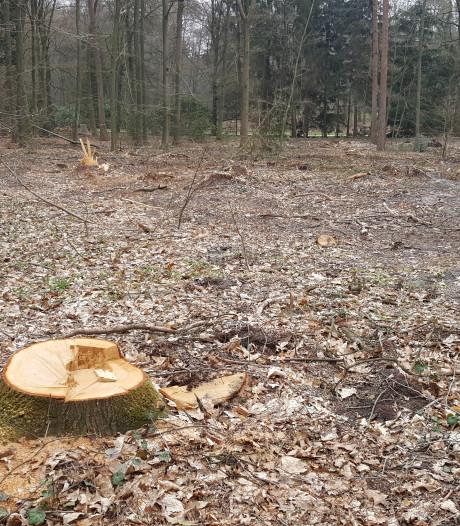 Illegaal gekapt 'Apenheul-bos' mogelijk op zelfde plek herplant