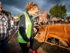 Paardenmarkt Elst blijft publiekstrekker