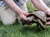 Nol (76) had geen idee dat zijn schildpad zo oud zou worden: 'Ik vermoed dat hij mij gaat overleven'