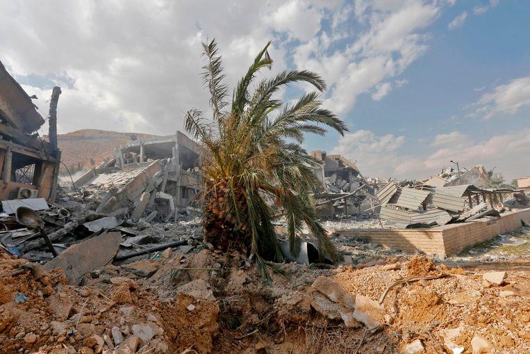 Een palmboom te midden van het puin van een onderzoekscentrum voor chemische wapens in Damascus. Beeld AFP