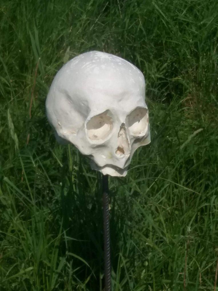 Een schedel van dichtbij.