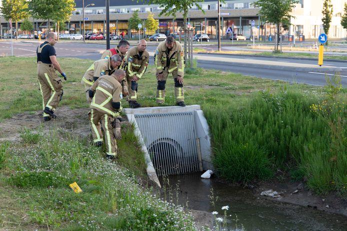 De brandweer redt eendenkuikens.