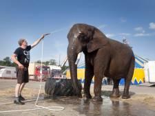 Ministerie: circus Freiwald mag wandelen met olifant Buba