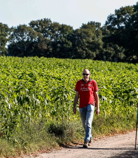 Franse taferelen in Holten; vijf voetbalvelden vol zonnebloemen