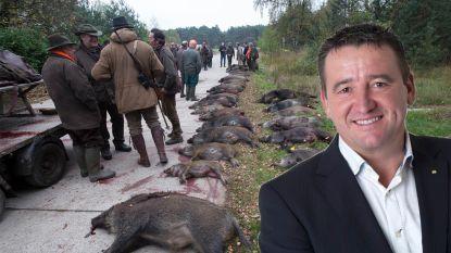 Burgemeester Hechtel-Eksel met de dood bedreigd na drijfjacht op everzwijnen