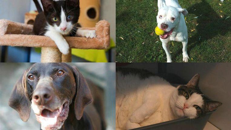 Dragon, Lola, Felix en Mel zijn 'kneusjes'; dieren met fysieke en/of gedragsproblemen. Beeld DOA