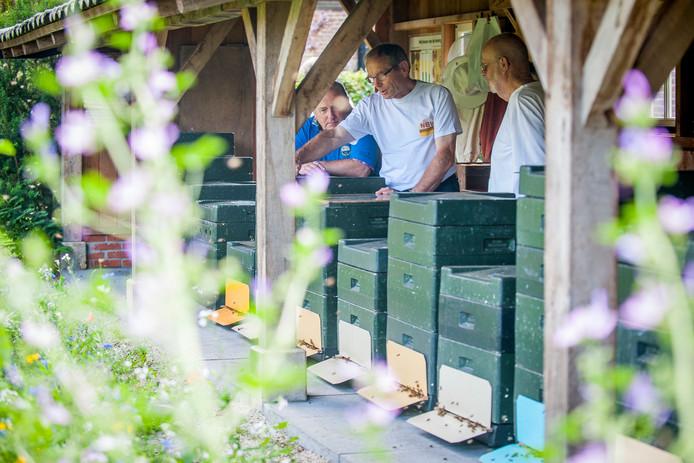 Inspectie van de bijenkasten tijdens de imkerdag op het Twickel. Advies: als een bij in de buurt komt, niet slaan!