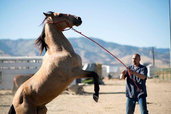Matthias Schoenaerts in 'The Mustang'