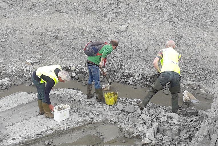 Vrijwilligers van Natuurpunt Rupelstreek organiseerden een reddingsactie voor de larven van de rugstreeppad.