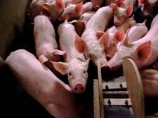 De varkenssector roept het wantrouwen zelf op