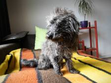 Beroemd op Facebook: Jules Krikke, een wonderhond met een mening