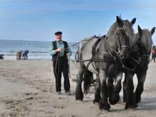 Oude ambacht van garnalenvissen met paarden herleeft in Westenschouwen