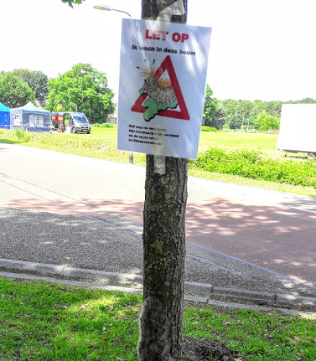 Avondvierdaagse Tilburg van start met waarschuwing aan 6000 lopers: pas op voor eikenprocessierupsen