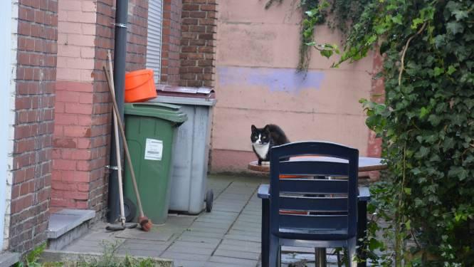 Nieuwe vzw moet zwerfkattenpopulatie onder controle houden