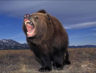 Feestbeest staat plots oog in oog met beer