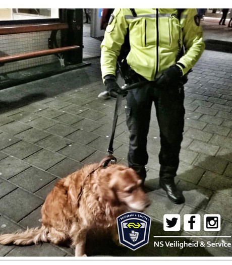 Hond reist op eigen houtje met trein van Helmond naar Eindhoven toe