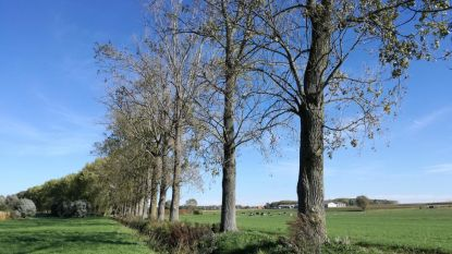 32 oude populieren langs de Kemmelbeek geveld, stronken blijven staan als woonplaats voor vleermuizen