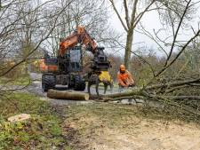 Klein schimmeltje met groot gevolg: 300 bomen plat in Sint-Michielsgestel