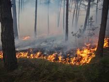 Aanleg brandgangen cruciaal voor veiligheid bungalowpark Holten