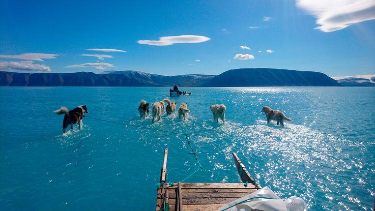 Sledehonden trekken op 13 juni in Noordwest-Groenland door ijswater. Dit jaar begon het ijs al op 30 april te smelten, de op een na vroegste datum sinds de metingen begonnen zijn. Experts wijten dit aan de opwarming van de aarde door de uitstoot van CO2. Beeld null