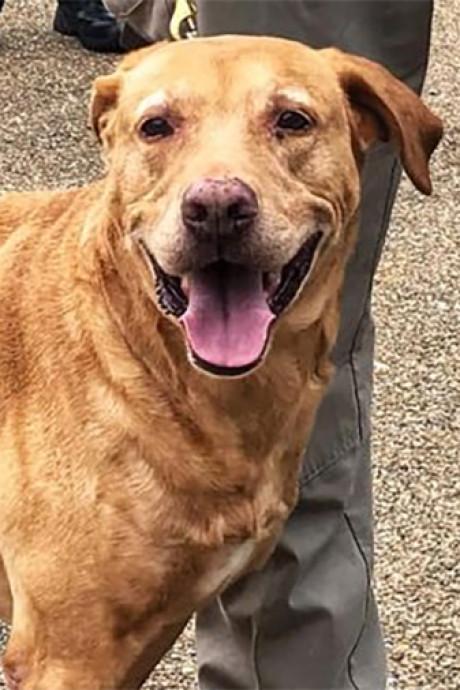 Agent gedegradeerd nadat hij K9-hond in asiel dumpt: 'Je doet dit werk omdat je van honden houdt'