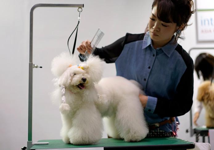 Speciale hondenkappers proberen de dieren er zo mooi als mogelijk uit te laten zien.