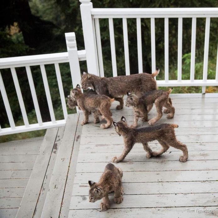 Na veertig minuten besloot de familie om weer op te stappen.