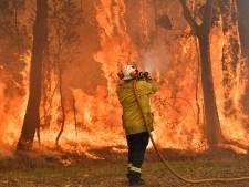 En 2019, les feux de forêt ont émis 6.000 mégatonnes de CO2: une année exceptionnelle
