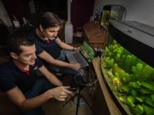 Datende guppy's uit Eindhoven trekken wereldwijd bekijks
