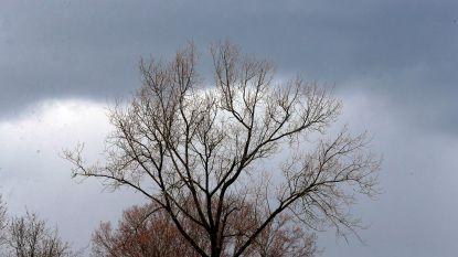 Zwaarbewolkte maar droge eerste lentedag, vrijdag tot 17 graden
