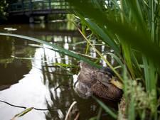 Geen vreemde vogels in opvang Soest