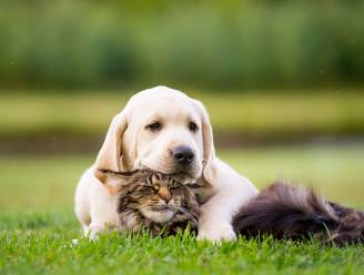 Je huisdier laten redden bij een brand? Binnenkort in Lievegem misschien dankzij sticker