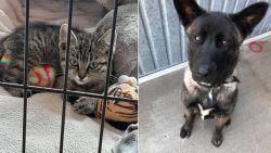 Dierenasiel Het Blauwe Kruis wil naast katje Ozzie ook hondje Rieke helpen met geld van inzameling