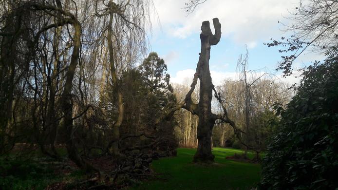 De dode treurbeuk in het Geldropse kasteelpark