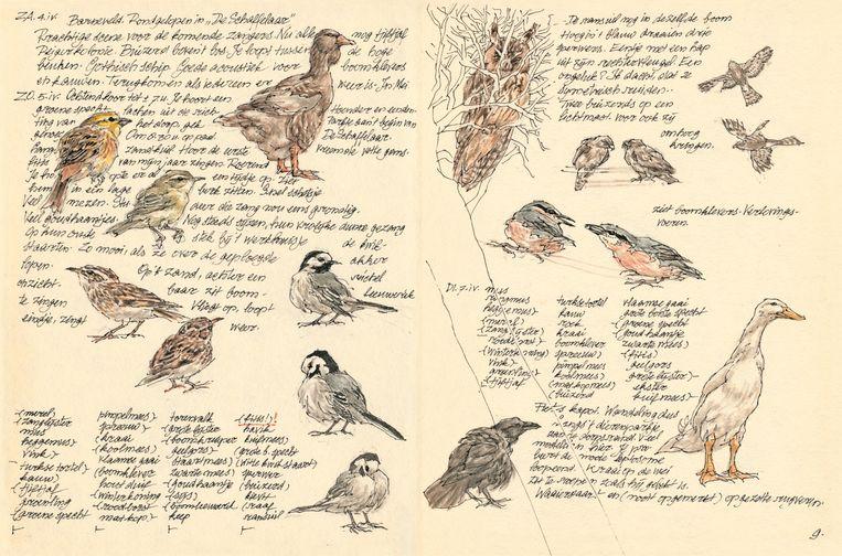 Uit het Vogeldagboek van Peter Vos. Beeld Peter Vos