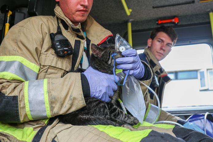 Een kat krijgt na de brand extra zuurstof toegediend.