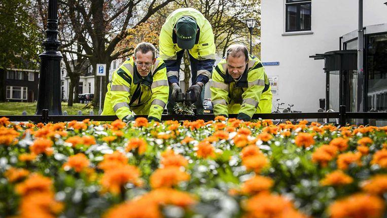 In aanloop naar Koningsdag worden oranje bloemen geplant in het centrum van Zwolle. Beeld anp