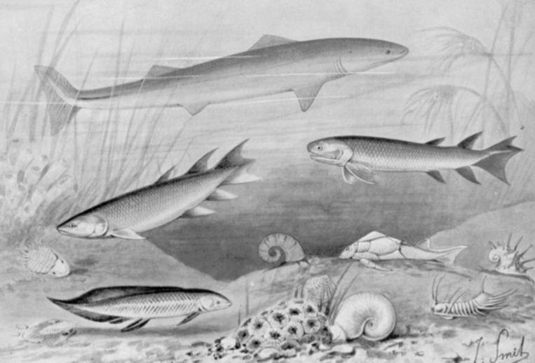 Zeedieren in het Devoon-tijdperk