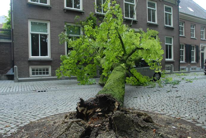 Deze kastanjeboom aan de Parade viel vrijdagochtend om.