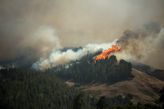 Tientallen meters hoge vlammen in de bossen bij Montaña Alta aan de noordkant van het Canarische eiland.