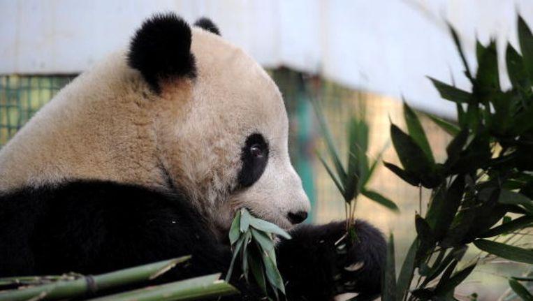 Het drama doet de discussie over verantwoordelijkheden binnen de Chinese dierentuinen losbarsten.